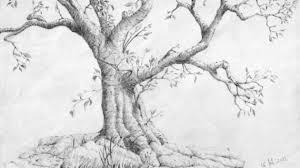 tag pencil drawing trees landscape drawing pencil