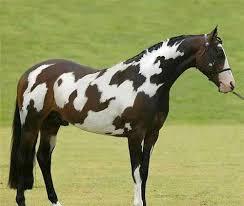 horse spells u0027horse u0027