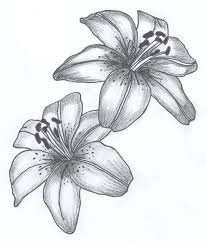 tattoo flower drawings lily flower drawing lily flowers drawings lily flowers tattoo