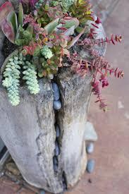 750 best succulents images on pinterest succulent plants