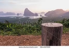 Stump Chair Tree Stump Stock Images Royalty Free Images U0026 Vectors Shutterstock