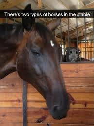 Soon Horse Meme - 37 of the funniest animal pictures funny animal pictures