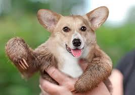 how to photoshop hybrid animals