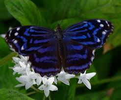 670 best butterflies and dragonflies images on