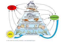 toxins and food webs u2014 science learning hub