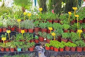 small house plants in flower pots sold on market stock photo