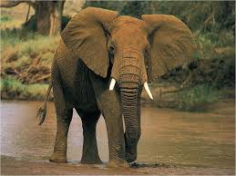 interpretation of a dream in which you saw elephant