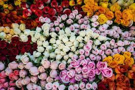 colorful roses colorful roses wallpaper free wallpaper