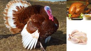thanksgiving turkey funny pics 10 funny facts about turkey interesting turkey facts on