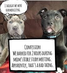 Dog Shaming Meme - puppy tales dog mama memes dog memes dog and doggies