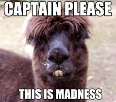 Alpaca Memes - memes for trafalcor s holiday part i ftl gurus