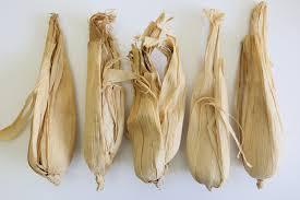 5 x natural corn husk hollow maize skins for craft floral