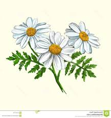 best free daisy vector illustration hand drawn painted watercolor