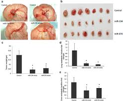mirs 134 and 370 function as tumor suppressors in colorectal