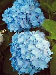 Blue Flowers - install the most beautiful blue flowers in the garden interior