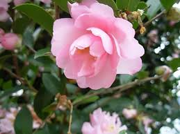 List Of Tropical Plants Names - flowers plants and shrubs by their common name garden helper