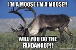 Moose Meme - i m a moose i m a moose will you do the fandango make a meme