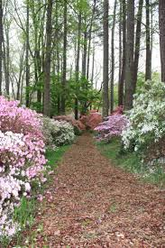 98 best beautiful paths images on pinterest country roads
