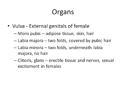 mons pubis hair female reproduction ch organs of the female ovaries produce egg