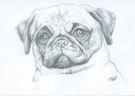 pencil drawing pug by xxpencilxstrokesxx on deviantart