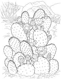 georgia o keeffe coloring pages 404 best desert images on pinterest desert landscape elementary