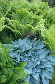 showy shade gardens fern smooth and leaves