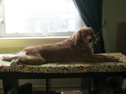 window bench for dog ikea hack it s not all mary poppins