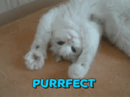 Purrrfect Meme - purrfect gifs get the best gif on giphy