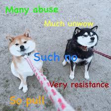 Best Doge Memes - 13 best doge images on pinterest doge akita dog and animal funnies