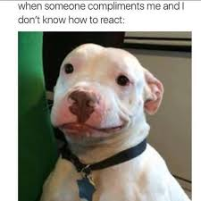 Pitbull Meme - viral smirking pit bull has a rescue story that proves just how
