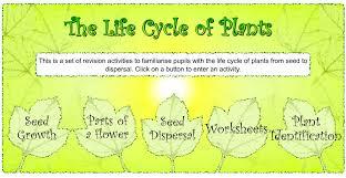 grade 6 diversity of life lesson 2 6 plant kingdom ms palmer u0027s