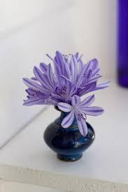 simple tiny flowers agapanthus arrangements diy
