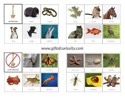free printable worksheets vertebrates invertebrates vertebrates vs invertebrates picture sorting cards montessori
