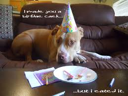 halloween birthday meme pitbull puppies happy birthday missy pinterest pitbull