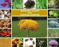 list several plants native to south america 18 medicinal plants for treating diabetes