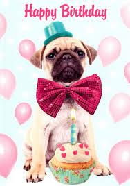 pug happy birthday greeting card cards kates