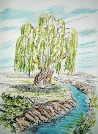 how to draw worksheets for the artist how to draw a willow tree