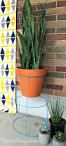 267 best spring gardening ideas images on pinterest container