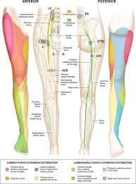 Nerves In The Knee Anatomy Pain Management Modalities After Total Knee Arthroplasty A Network