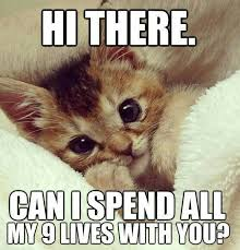 Cute Kittens Meme - hi do you want to know about your pet read all https www