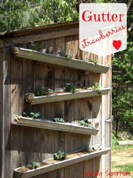 Diy Strawberry Planter by Gutter Strawberries Mount Them Above And You Can Harvest From