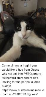 Cuddle Buddy Meme - come gimme a hug if you would like a hug from guess why not call