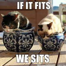 Tardar Sauce Meme - grumpycat and pokey meme for more grumpy cat stuff gifts and