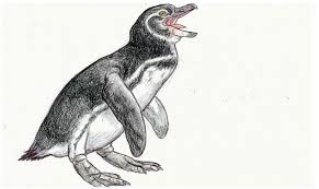 galapagos trip sketches galapagos penguin by devinnath on deviantart