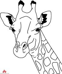 giraffe head outline drawing in black and white free clipart
