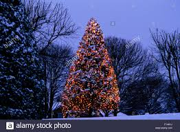 diy lighted outdoor tree stock photo royalty free