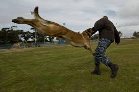 17 terms only military working dog handlers will understand