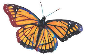 learn how to draw a butterfly quarto creates