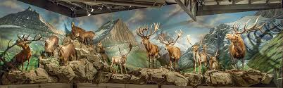 hand painted mural art wildlife trophy room wall murals commercial use trophy rooms