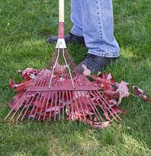 Fall Cleanup Landscaping by Affordable Leaf Removal U0026 Fall Cleanup Services Cincinnati Ohio